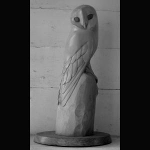 Barn owl Sycamore with eyes in teak