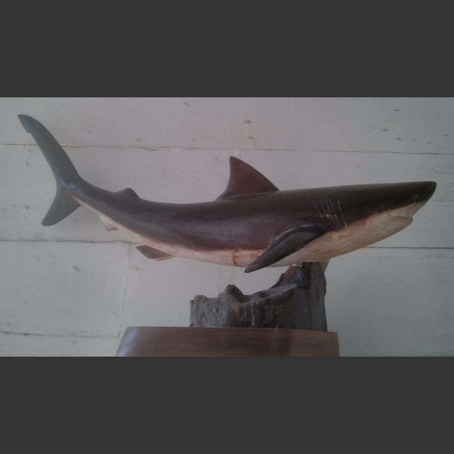 Great White Shark Carved in mulberry